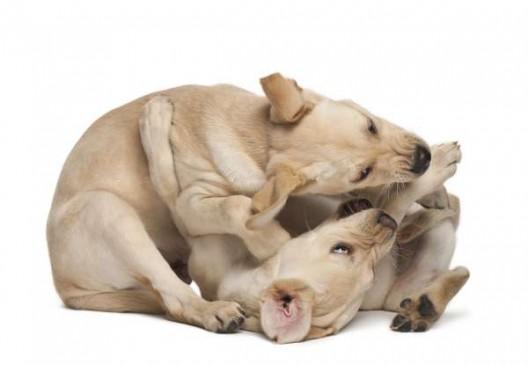 Votre chien est-il dominant ou soumis?