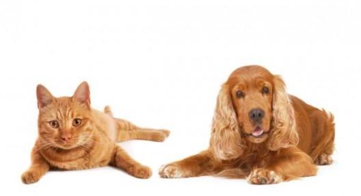 La médecine comportement pour chats et chiens