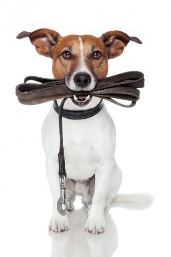 Les trois meilleurs colliers et harnais pour votre chien