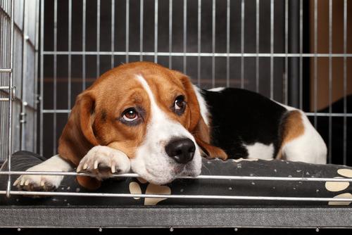 Une cage pour votre animal de compagnie