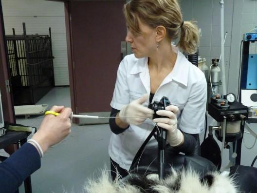 Dre Leclerc en action avec Myrko et l'endoscope