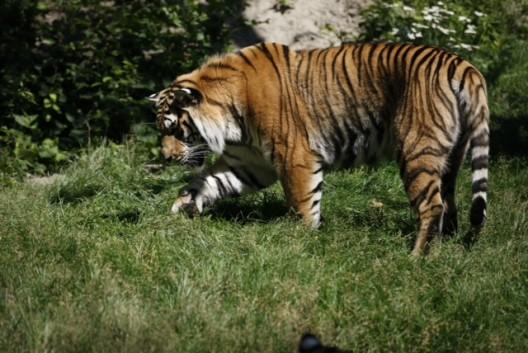 Myrko au Zoo sauvage de St-Félicien