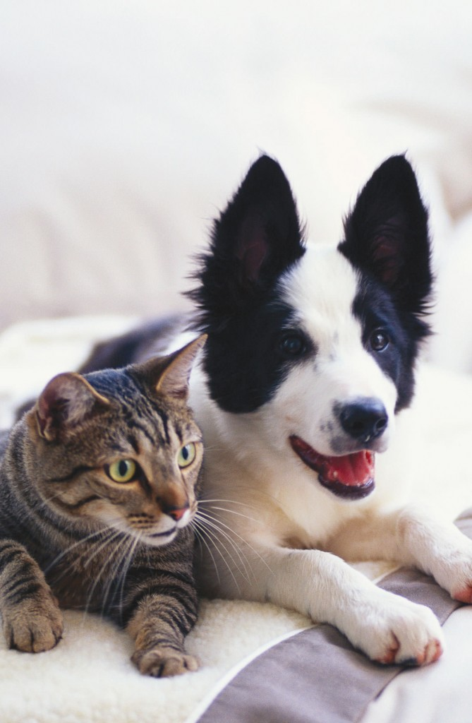 Comportement animal: Pourquoi mon animal détruit tout?
