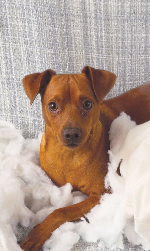 Comportement animal: Pourquoi mon chien est-il incontrôlable?