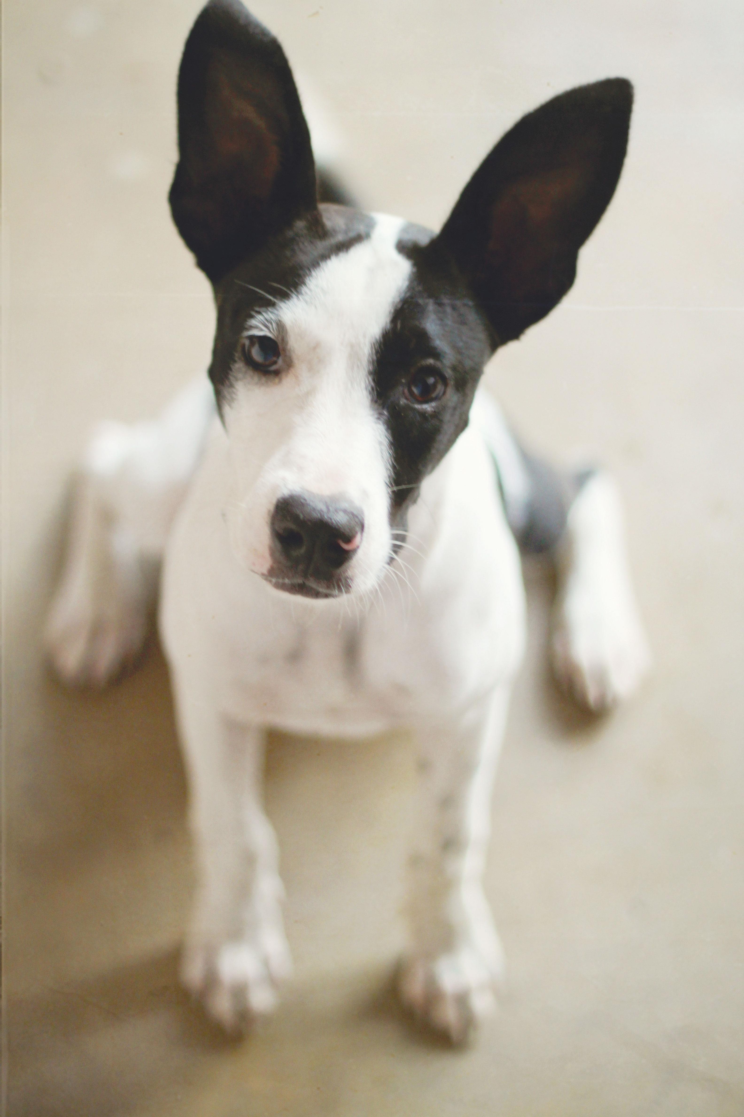 Info comportement animal: Pourquoi mon chien mange des selles?
